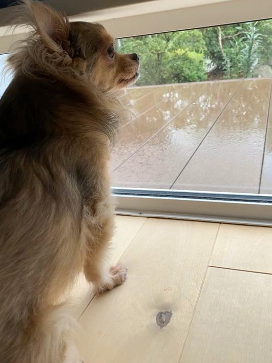 南側のウッドデッキ側に設けた地窓は愛犬が外を眺めるのにちょうどよい場所。