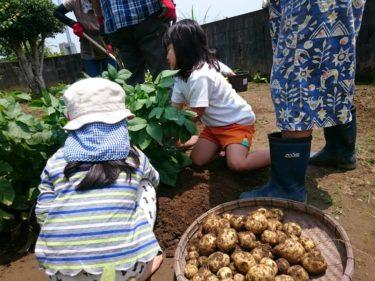 正工務店の農園で芋ほり体験